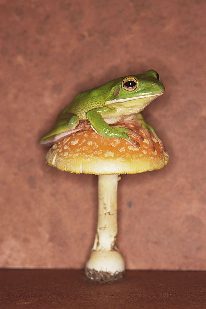 Pin by Froggy on Frog Toad High resolution images