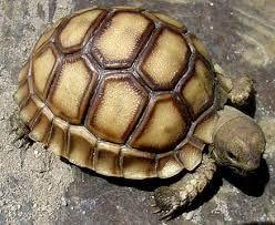 Resultado de imagen de fotos de tortugas