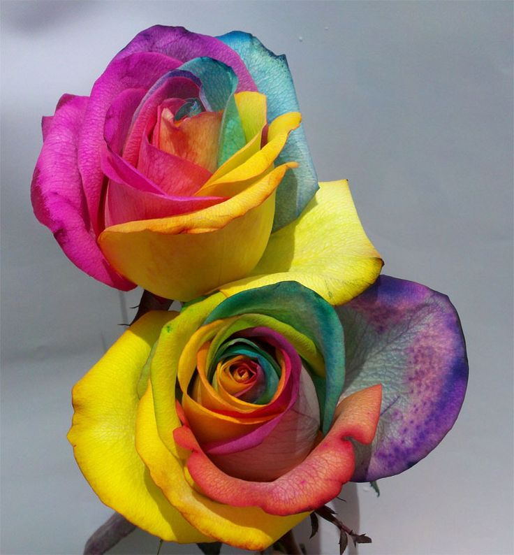 1000 images about decorative tie dye flowers on pinterest for How to make tie dye roses