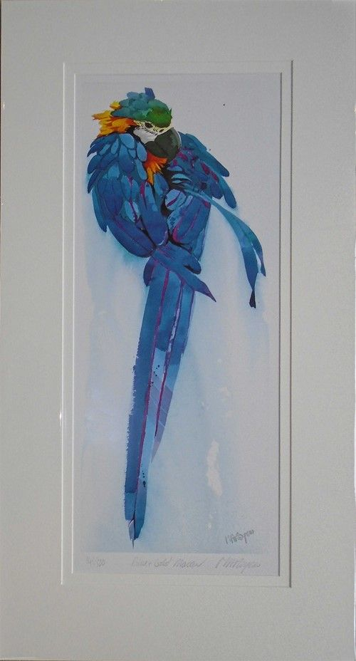 Blue and Gold Macaw Limited Edition 141/500 by Mary Ann Rogers