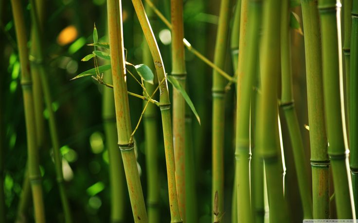 Nature_Forest_Bamboo_bush_036269_.jpg (2560×1600)