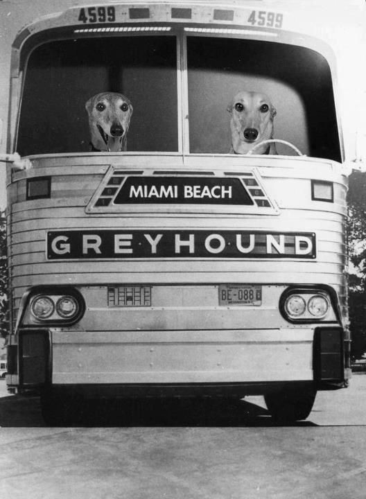 greyhound bus...hey guys...where are you headed? Palm Springs is delightful this time of the year. You can work on your tan...