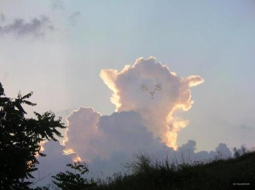 All Kitties Go To Heaven Cloud Shapes Clouds Cats