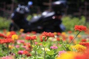 第4回 2011夏・ツーリング・フォトコンテスト 銅賞・愛車と真夏のお花畑・taishiさん