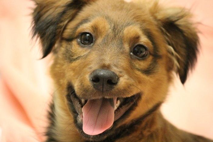 Homeward Bound Dog Rescue In Freehold Nj