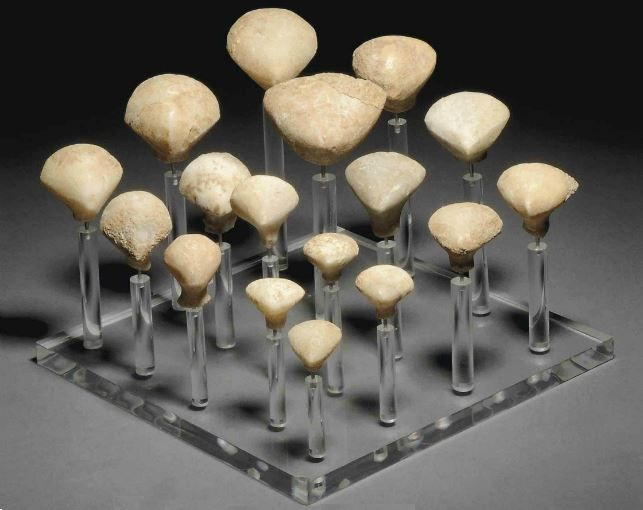 Anatolian marble Stargazer heads, Chalcolitic period, 3200-2500 B.C.   Of Kylia type, each broad backward-tilting stylised head on narrow neck, mounted together on stand, 5 cm high max. Private collection