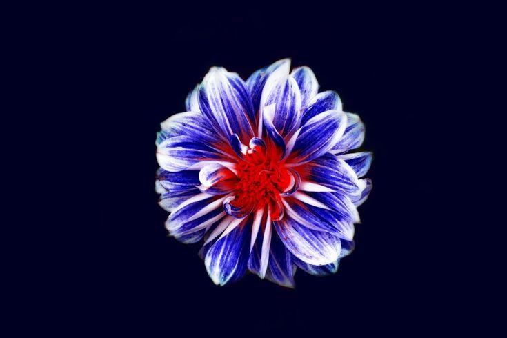 Download this free photo here www.picmelon.com #freestockphoto #freephoto #freebie /// Bloom in the Dark   picmelon