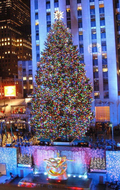 Christmas in New York City (Rockyfeller center) biggest tree ever!.