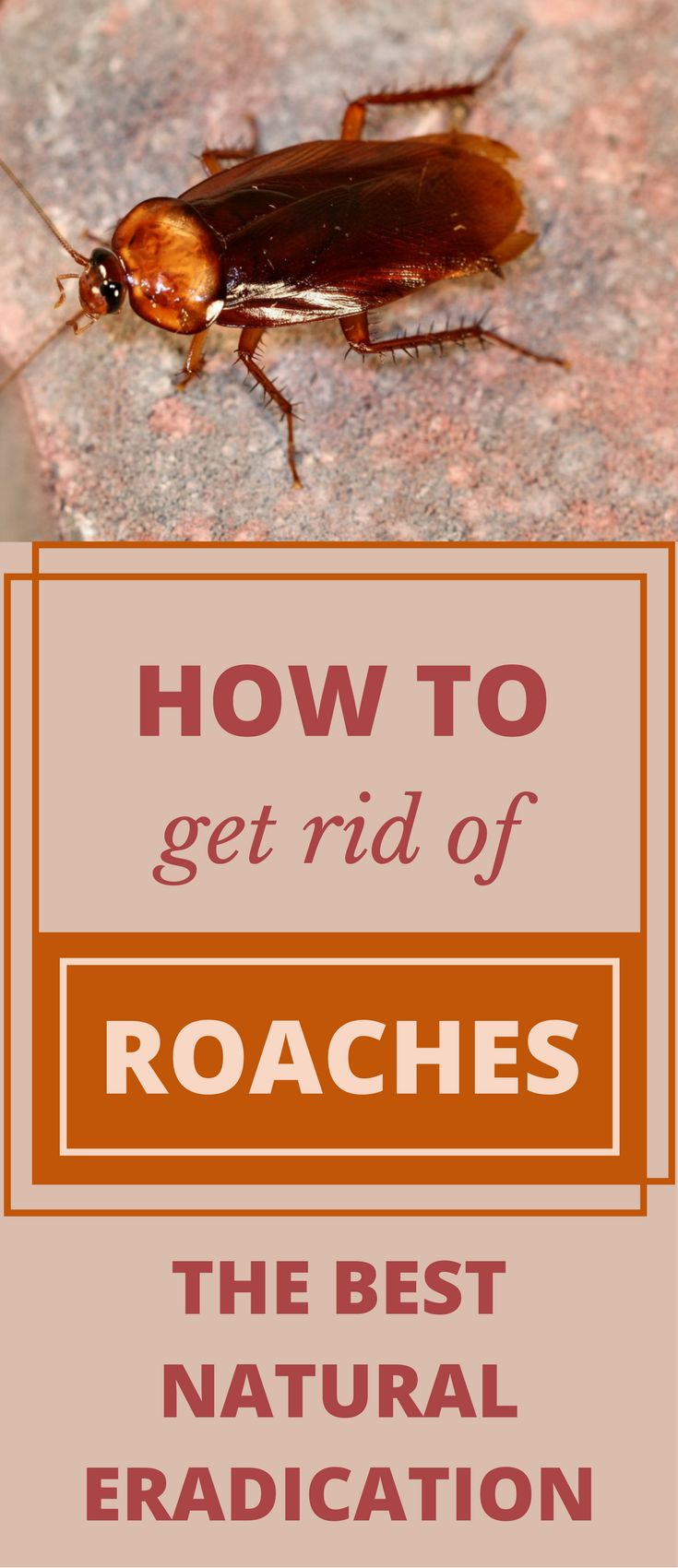 How To Get Rid Of Roaches - The Best Natural Eradication