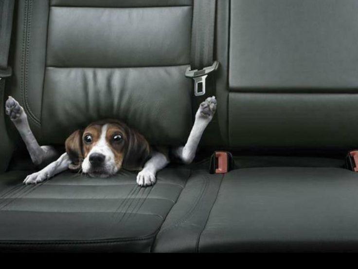 funny dog under car seat - Google zoeken