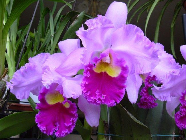 10+2érdekes dolog az orchideákról, amit eddig nem tudtál!