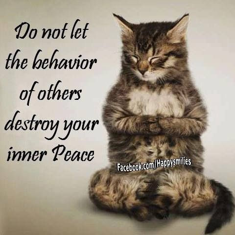 87 best zen cats images on pinterest  kitty cats yoga