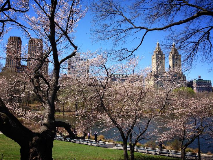 Central Park in April  Photographed by Margrethe Tang