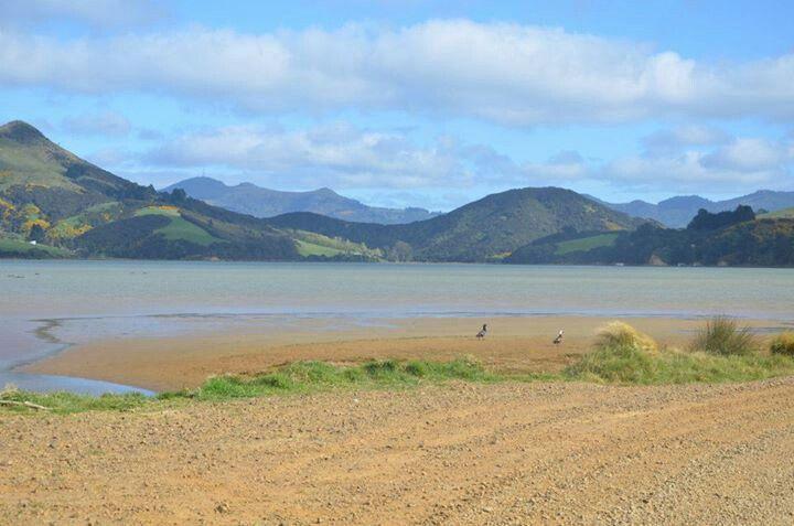 #Dunedin #Otago #NewZealand. If you like our photos, like us on FB www.facebook.com/trendstravel #dunedin #otagopeninsula #otagobay #NewZealand