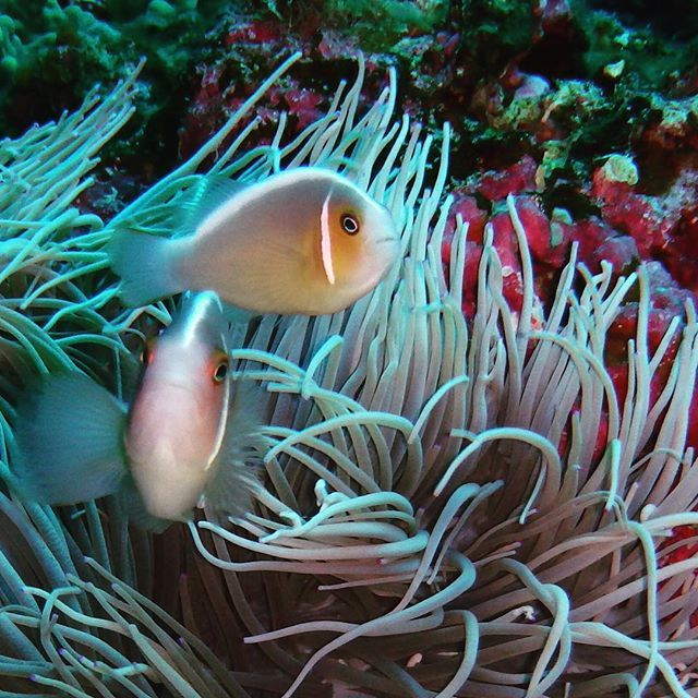 #Underwater #experience! #VarietyCruises #ScubaDiving  Photo credits: @maimaai615