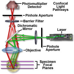 Theory of Confocal Microscopy
