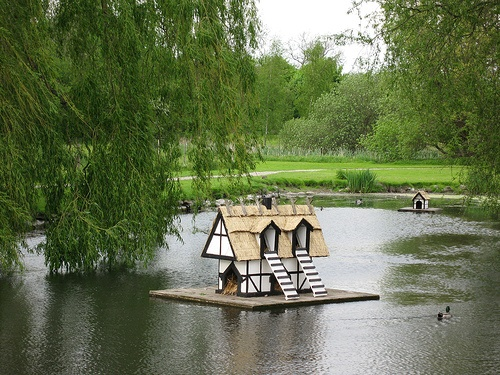 Duck house =)