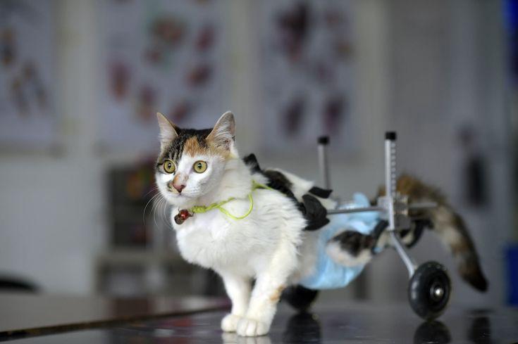Animais biônicos: os bichos salvos pela tecnologia