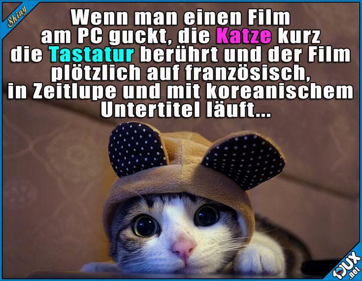 Wie schaffen die das immer? ^^  Lustige Sprüche / Lustige Bilder #Katze #Katzen #trotzdemsüß #lustigeSprüche #Humor #Jodel #1jux #jux #lustigeBilder #süß #niedlich #sowahr