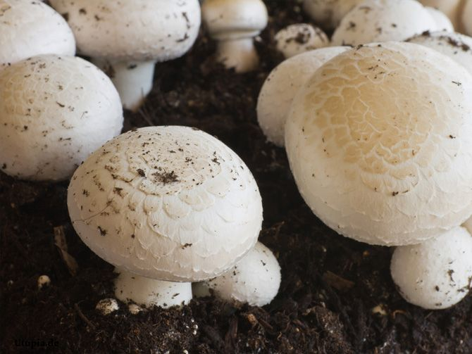 Weder Garten noch Balkon? Züchten Sie doch Pilze! | Eigenes Gemüse – auch ohne Garten!