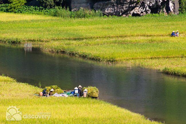 Short trip to Halong Bay-on-land (Tam Coc) & Cuc Phuong National Park Vietnam