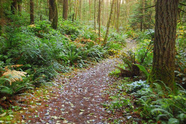 Illahee Nature Preserve, Bremerton, Washington