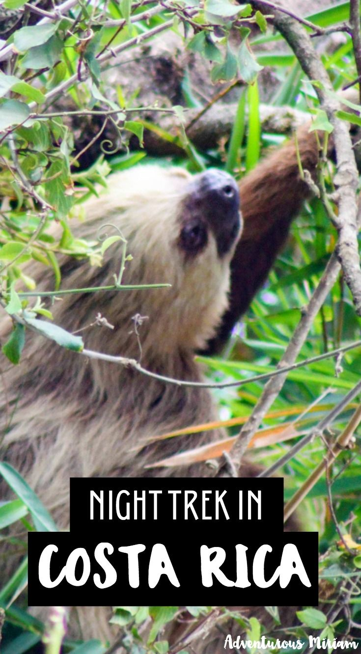 Joining a night trek in Finca Santa Maria was a fun way to see wildlife in Monteverde Cloud Forest. Here's how a night trek is like in Costa Rica and what you can expect.