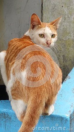 Cat search eat at roadside
