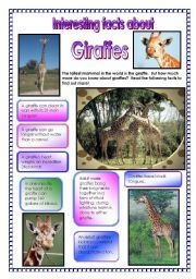 Fun Facts About Giraffes | English worksheet: Interesting facts about giraffes! - did you know ...