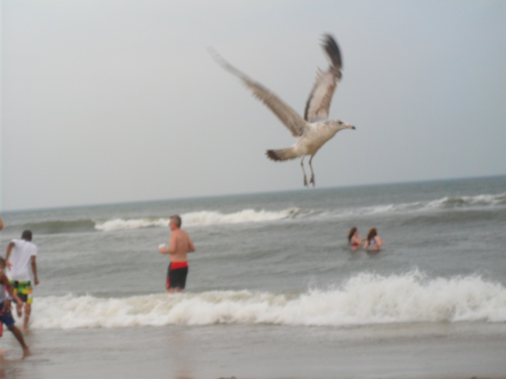Seagull @ Virginia Beach. Looks like it is huge in the background instead of in the front!
