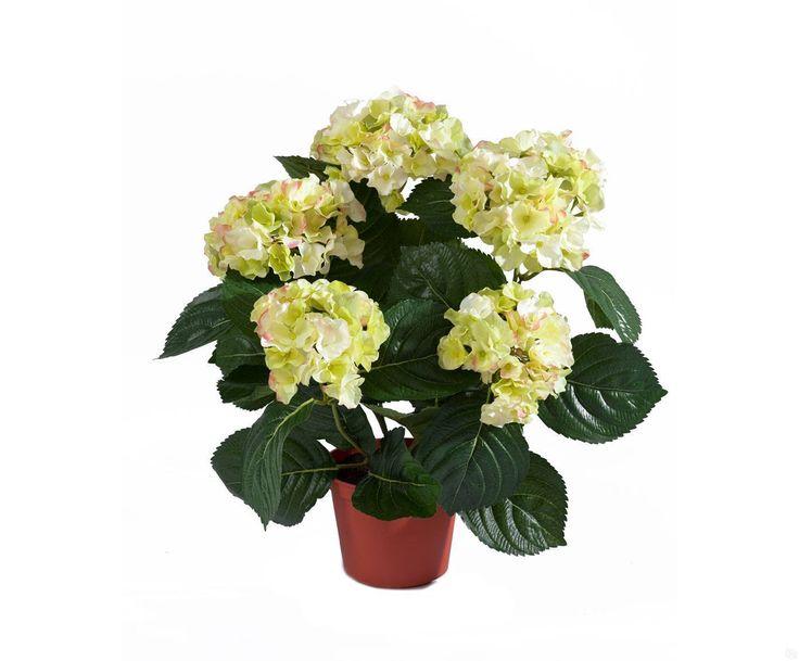 Цветы могут украсить любой домашний и садовый интерьер. Одним из таких растений является гортензия. Ее название в переводе с латинского означает «тоскующая по воде». Растение достигает длину стеблей один и более метров в высоту, завершаясь круглыми шапками соцветий. Цветет с апреля по ноябрь. Чтобы цветок радовал глаз своим внешним видом, необходимо знать, как ухаживать за гортензией. В противном случае, вместо ярких бутонов на ней останутся лишь желтые листья. Гортензия – виды и сорта…
