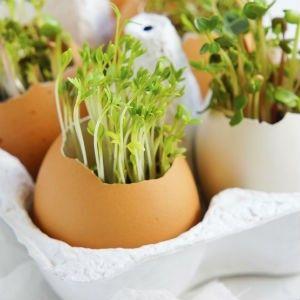 【紙の卵パック】おしゃれな収納アイデア・インテリア活用術