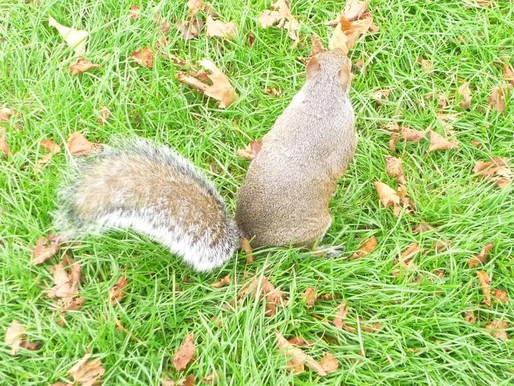 Squirrel / london