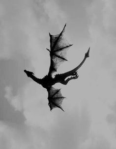 Filmed in flight, the Pterosaur. Yantai City, Shandong Province, China.