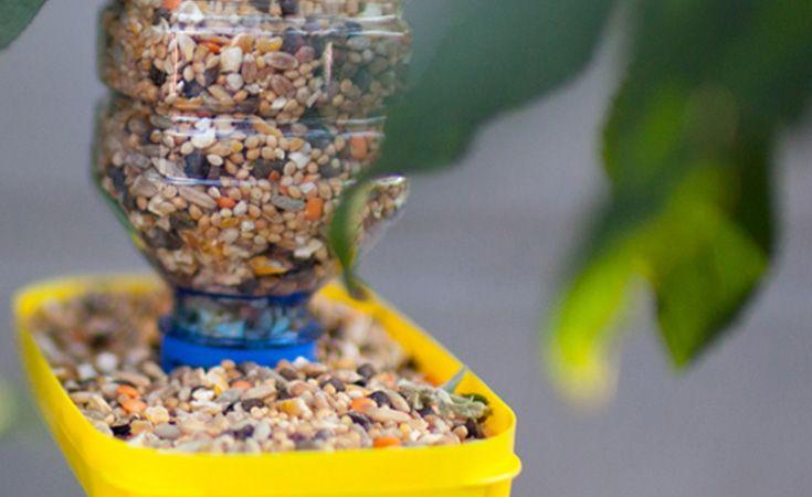 Vos enfants vont adorer fabriquer cette mangeoire à oiseaux et observer les jolies volatiles venir ...