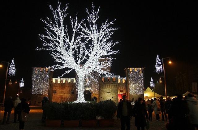 L'albero di Piazza della Rocca