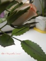 Сахарные цветы, фигурки из мастики или марципана( мои работы) (страница 1) : фотографии Разное