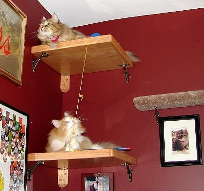 Cat perchKitty Jungles, Fur Baby, Kitty Decor, Furr Baby