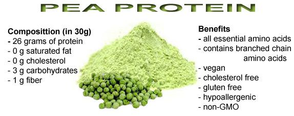 Pea protein composition and benefits