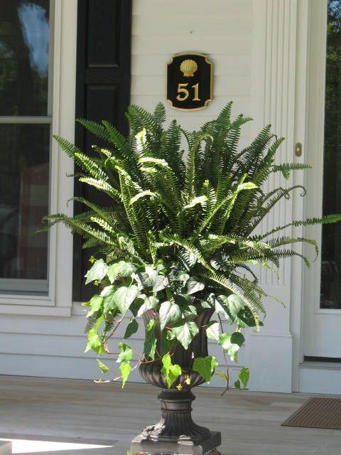 Best 25+ Front porch plants ideas on Pinterest | Deck ...