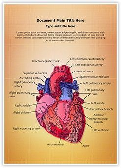 Cardiac Blood Vessels MS Word Template is one of the best MS Word Templates by EditableTemplates.com. #EditableTemplates #Pump #Ventricle #System #Internal #Life #Cardiac Blood Vessels #Anatomical #Part #Aorta #Human #Drawing #Body #Coronary #Symbol #Cardiology #Circulation #Healthcare #Scientific #Care #Vessel #Attack #Health #Pulse #Model #Heartbeat #Blood #Surgery #Illustration #Vein #Atrium #Medical #Diagram #Pulmonary #Test #Section #Biology #Science #Scalable #Anatomy