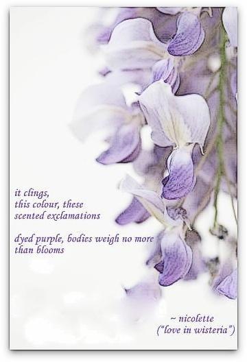 Love in wisteria © Nicolette van der Walt