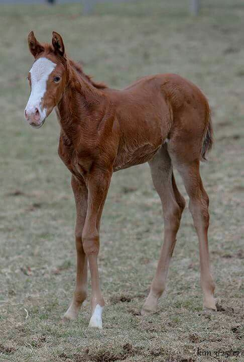 Full sister to Res Judicata and Mama Jones by Smarty Jones.