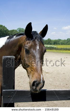 17 Best Images About Horse Body Language On Pinterest