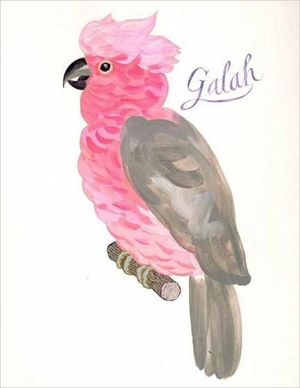 """Galah"" by Jeffrey Fisher"