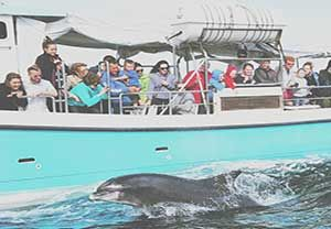 Where to see whales and dolphins on the Wild Atlantic Way, Ireland #Ireland #WhaleWatching http://irelandways.com/wild-atlantic-whales-dolphins