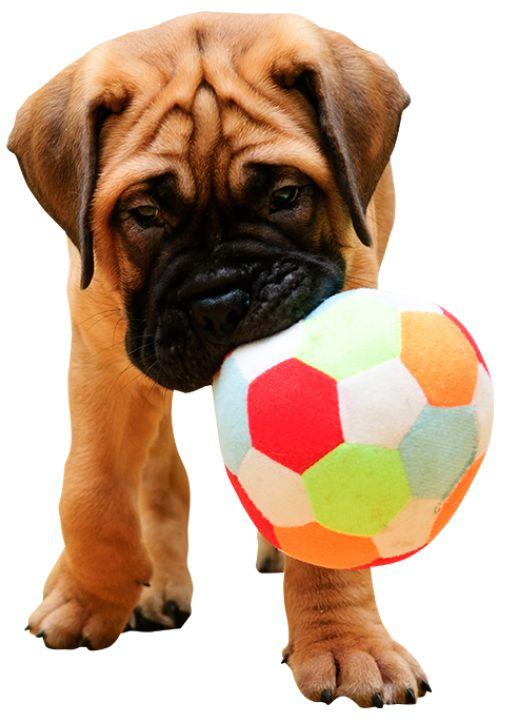 Vinilo Perrito pequeño. Cachorro muy mono ❤ adhesivos bimago, diseños bien escogidos, en distintos tamaños. Es sin duda un regalo perfecto para niños o cualquier amante de los animales.