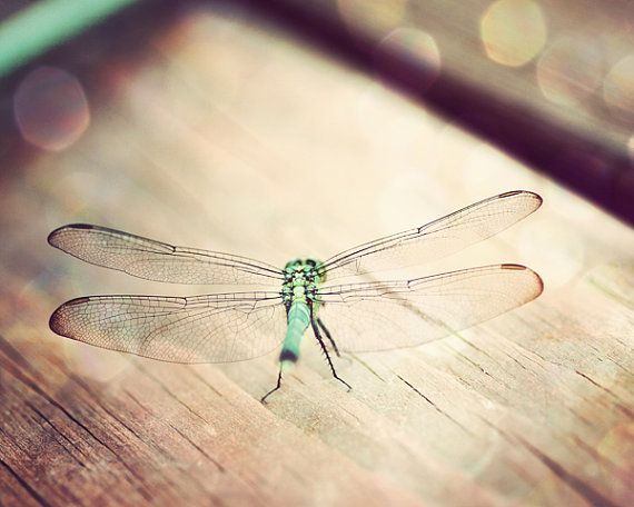 bohemian decor dragonfly photograph living room door TheGinghamOwl, $21.00