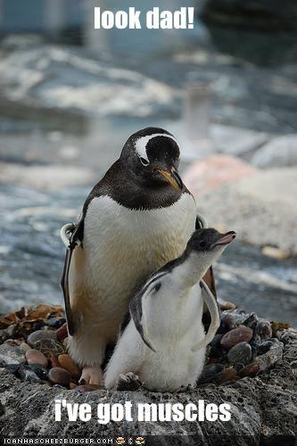 d8a6b370286190e52e61548715d0ed2b funny animal pictures pictures of 102 best penguins images on pinterest penguins, penguin love and,Cute Penguin Meme