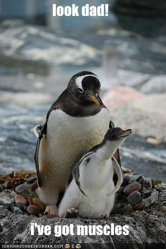 Funny Penguins | This is my Picture Page » funny-pictures-little-penguin-has-muscles